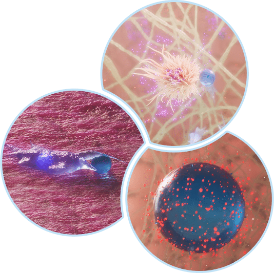 From Inflammatory to proliferative phase